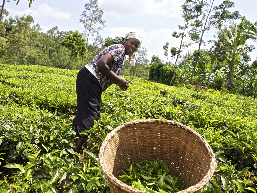 Agricultural Asset Finance